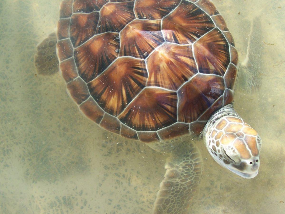Zwierzęta na wyspie Tortuga